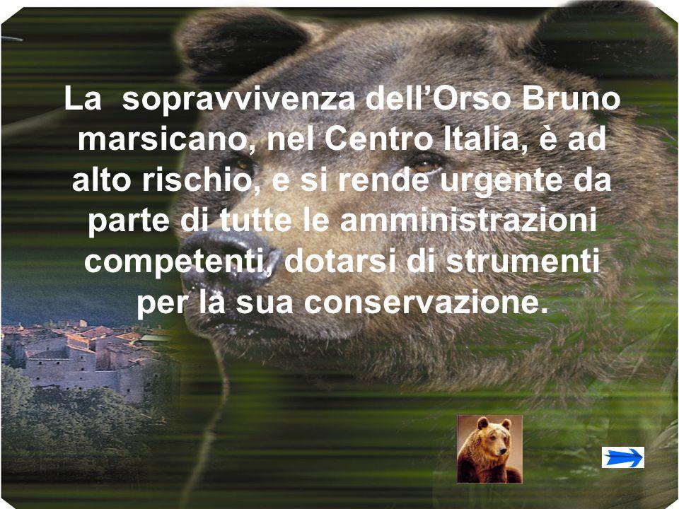 La sopravvivenza dellOrso Bruno marsicano, nel Centro Italia, è ad alto rischio, e si rende urgente da parte di tutte le amministrazioni competenti, dotarsi di strumenti per la sua conservazione.