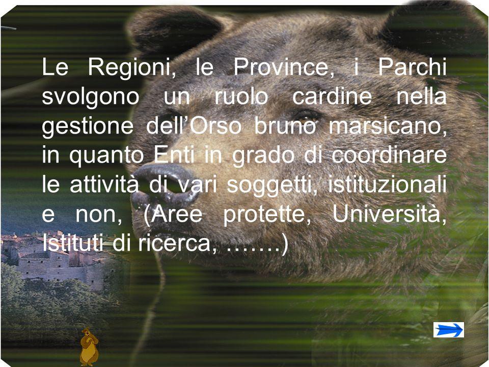 Le Regioni, le Province, i Parchi svolgono un ruolo cardine nella gestione dellOrso bruno marsicano, in quanto Enti in grado di coordinare le attività di vari soggetti, istituzionali e non, (Aree protette, Università, Istituti di ricerca, …….)