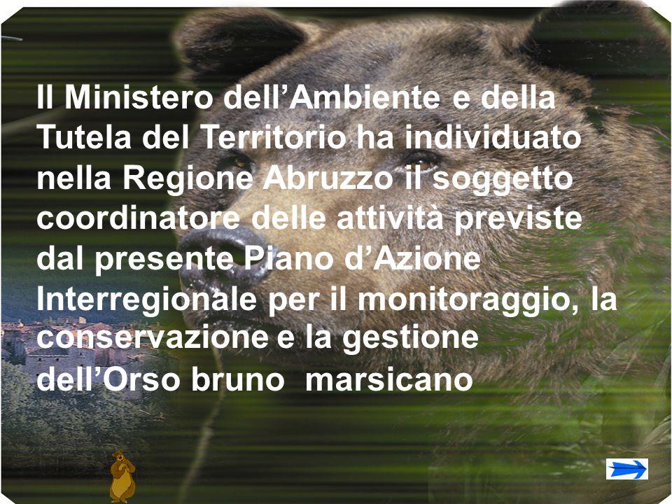 Il Ministero dellAmbiente e della Tutela del Territorio ha individuato nella Regione Abruzzo il soggetto coordinatore delle attività previste dal presente Piano dAzione Interregionale per il monitoraggio, la conservazione e la gestione dellOrso bruno marsicano