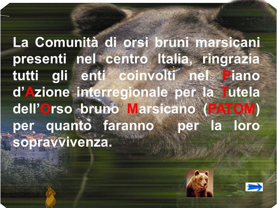 La Comunità di orsi bruni marsicani presenti nel centro Italia, ringrazia tutti gli enti coinvolti nel Piano dAzione interregionale per la Tutela dellOrso bruno Marsicano (PATOM) per quanto faranno per la loro sopravvivenza.