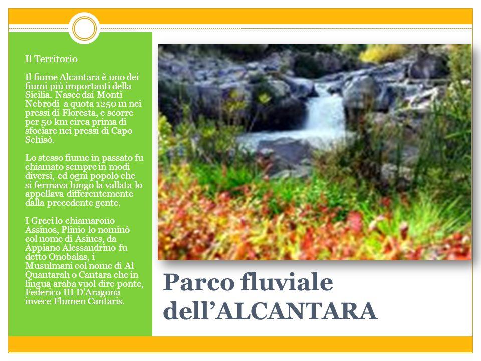 Parco fluviale dellALCANTARA Il Territorio Il fiume Alcantara è uno dei fiumi più importanti della Sicilia. Nasce dai Monti Nebrodi a quota 1250 m nei