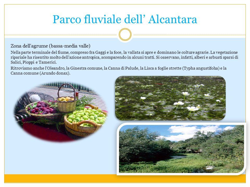 Parco fluviale dell Alcantara Zona dell agrume (bassa-media valle) Nella parte terminale del fiume, compreso fra Gaggi e la foce, la vallata si apre e dominano le colture agrarie.