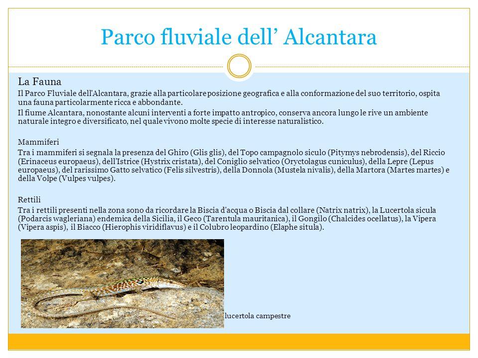 Parco fluviale dell Alcantara La Fauna Il Parco Fluviale dell Alcantara, grazie alla particolare posizione geografica e alla conformazione del suo territorio, ospita una fauna particolarmente ricca e abbondante.