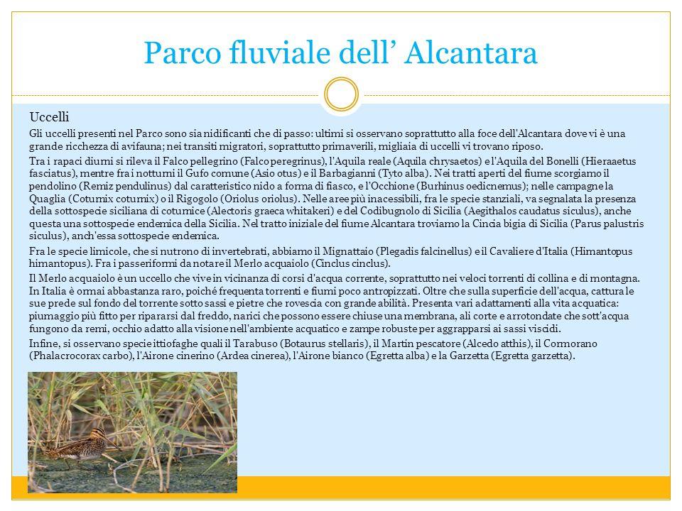 Parco fluviale dell Alcantara Uccelli Gli uccelli presenti nel Parco sono sia nidificanti che di passo: ultimi si osservano soprattutto alla foce dell Alcantara dove vi è una grande ricchezza di avifauna; nei transiti migratori, soprattutto primaverili, migliaia di uccelli vi trovano riposo.