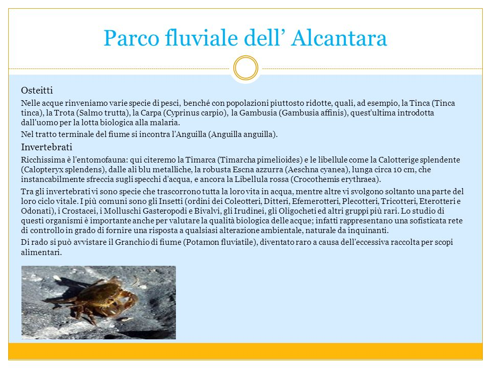 Parco fluviale dell Alcantara Osteitti Nelle acque rinveniamo varie specie di pesci, benché con popolazioni piuttosto ridotte, quali, ad esempio, la Tinca (Tinca tinca), la Trota (Salmo trutta), la Carpa (Cyprinus carpio), la Gambusia (Gambusia affinis), quest ultima introdotta dall uomo per la lotta biologica alla malaria.