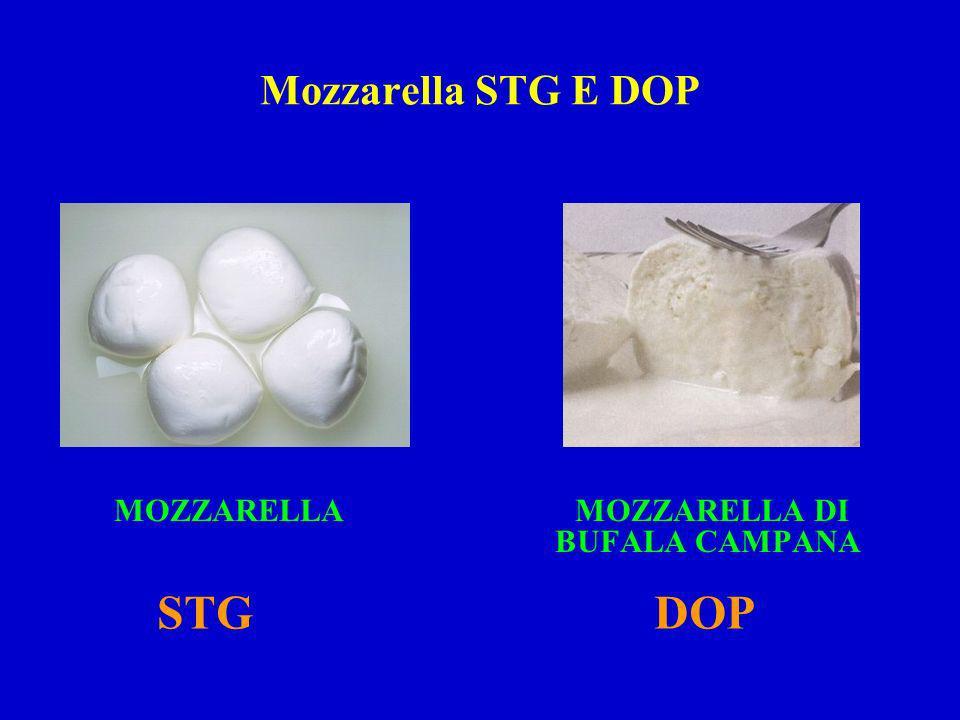 Mozzarella STG E DOP MOZZARELLA DI BUFALA CAMPANA MOZZARELLA STGDOP