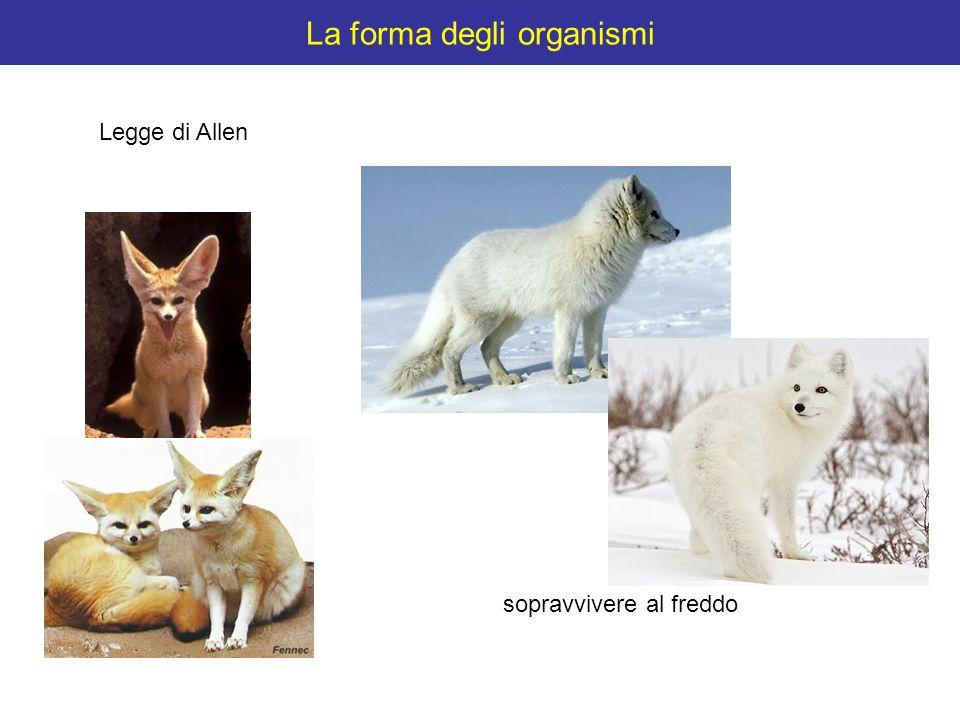 La forma degli organismi sopravvivere al freddo Legge di Allen
