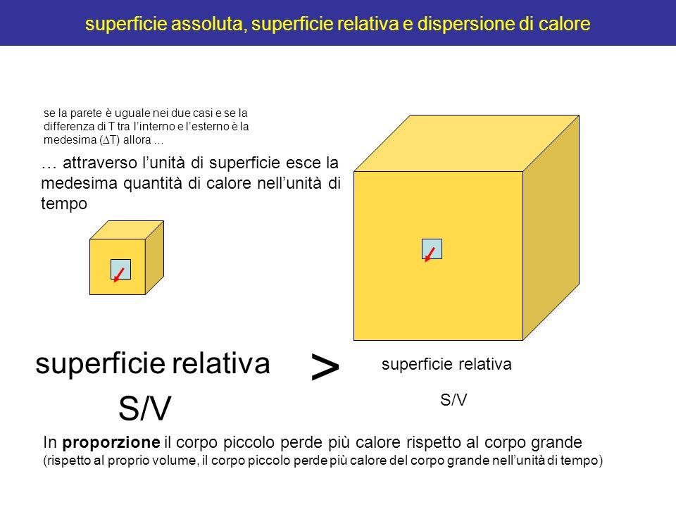 superficie assoluta, superficie relativa e dispersione di calore superficie relativa > S/V … attraverso lunità di superficie esce la medesima quantità
