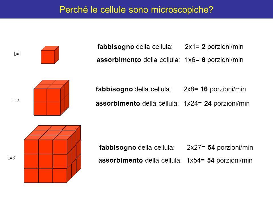 Perché le cellule sono microscopiche? fabbisogno della cellula: 2x27= 54 porzioni/min assorbimento della cellula: 1x54= 54 porzioni/min fabbisogno del