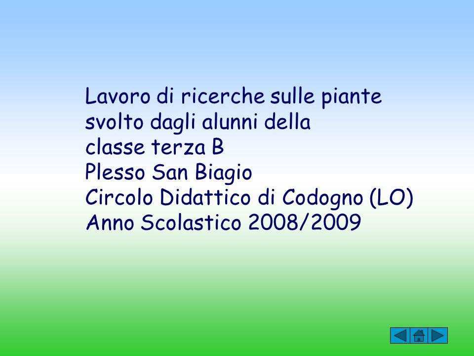 Lavoro di ricerche sulle piante svolto dagli alunni della classe terza B Plesso San Biagio Circolo Didattico di Codogno (LO) Anno Scolastico 2008/2009