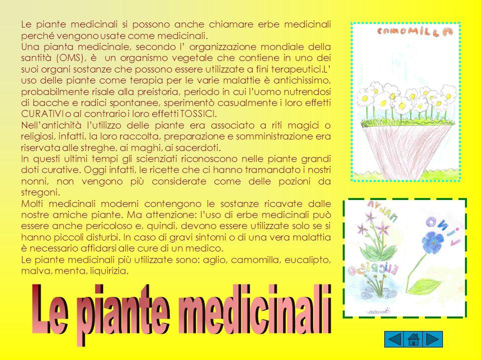 Le piante medicinali si possono anche chiamare erbe medicinali perché vengono usate come medicinali. Una pianta medicinale, secondo l organizzazione m