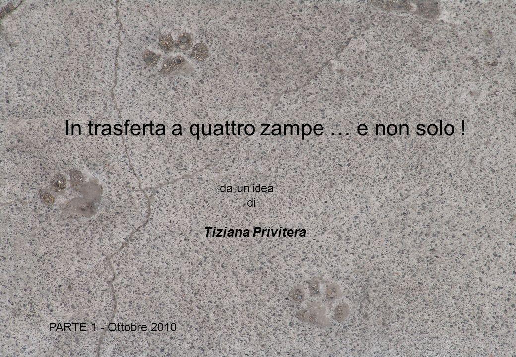 da unidea di Tiziana Privitera PARTE 1 - Ottobre 2010 In trasferta a quattro zampe … e non solo !