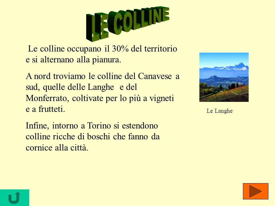 Le colline occupano il 30% del territorio e si alternano alla pianura. A nord troviamo le colline del Canavese a sud, quelle delle Langhe e del Monfer