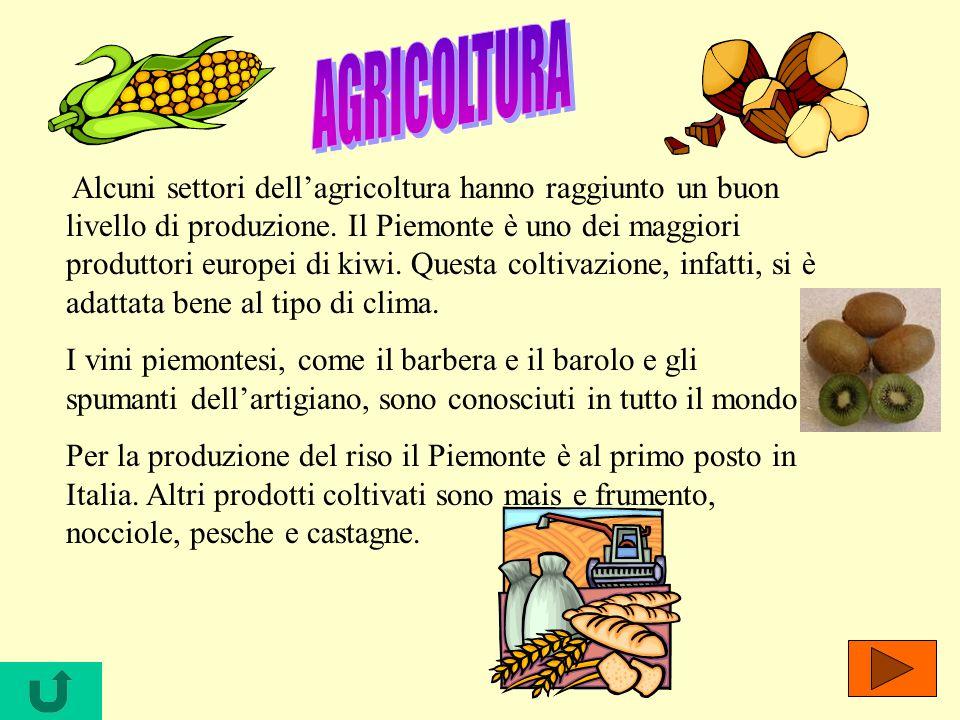 Alcuni settori dellagricoltura hanno raggiunto un buon livello di produzione. Il Piemonte è uno dei maggiori produttori europei di kiwi. Questa coltiv