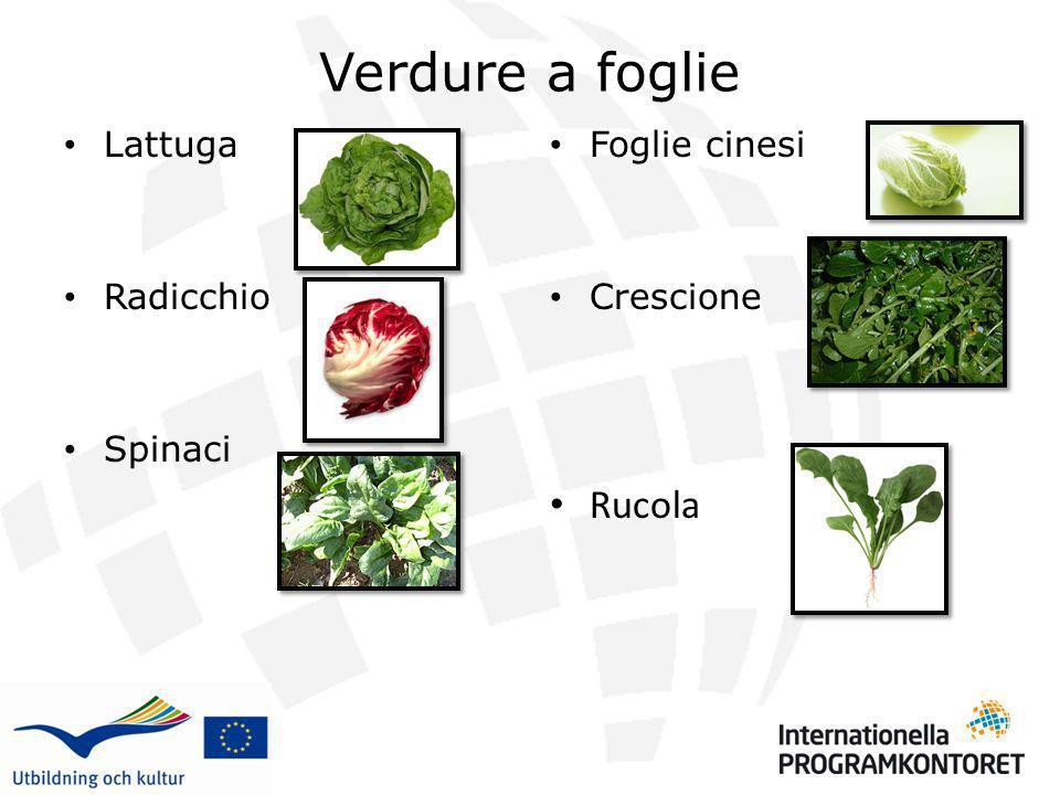 Verdure a foglie Lattuga Radicchio Spinaci Foglie cinesi Crescione Rucola 1 2 3 4