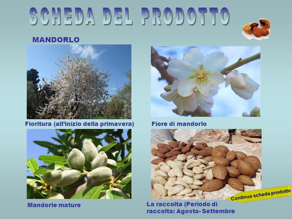 MANDORLO Continua scheda prodotto Fioritura (allinizio della primavera)Fiore di mandorlo Mandorle mature La raccolta (Periodo di raccolta: Agosto- Set