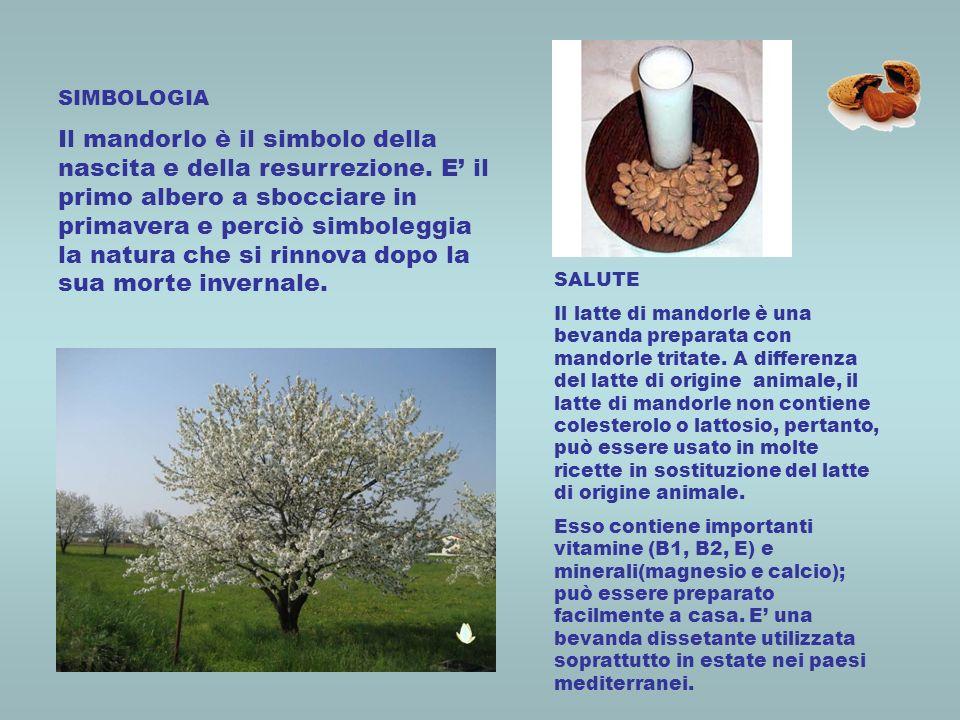 SIMBOLOGIA Il mandorlo è il simbolo della nascita e della resurrezione. E il primo albero a sbocciare in primavera e perciò simboleggia la natura che