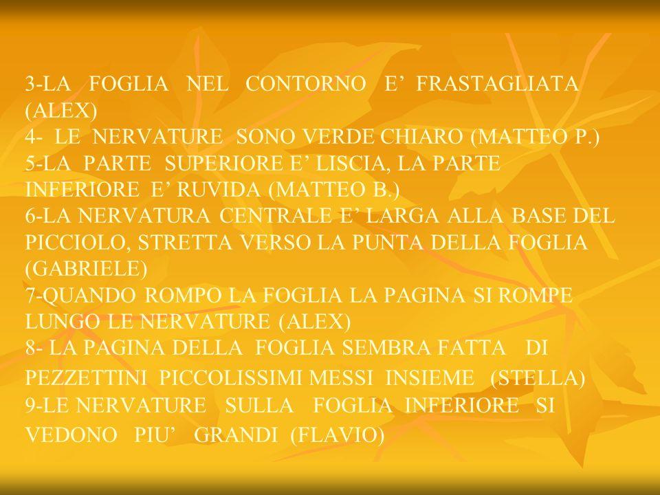 3-LA FOGLIA NEL CONTORNO E FRASTAGLIATA (ALEX) 4- LE NERVATURE SONO VERDE CHIARO (MATTEO P.) 5-LA PARTE SUPERIORE E LISCIA, LA PARTE INFERIORE E RUVID