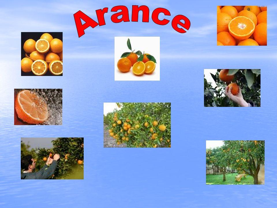 L arancio è un albero da frutto appartenente al genere Citrus (famiglia Rutaceae), il cui frutto è l arancia, talora chiamata anche arancia dolce per distinguerla dall arancia amara.
