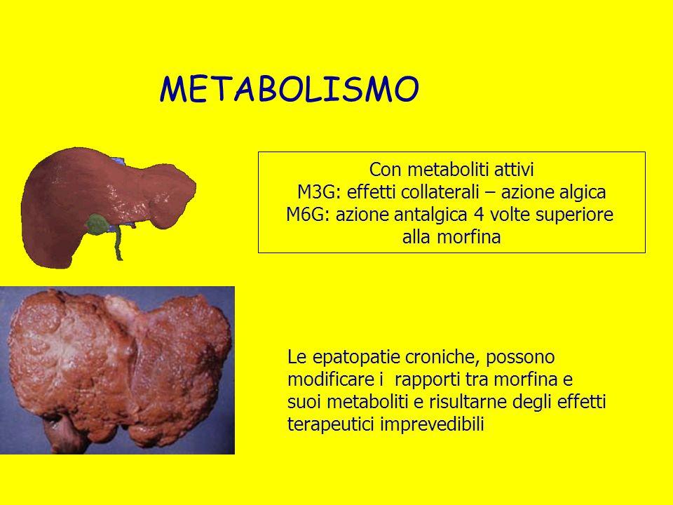 METABOLISMO Le epatopatie croniche, possono modificare i rapporti tra morfina e suoi metaboliti e risultarne degli effetti terapeutici imprevedibili C