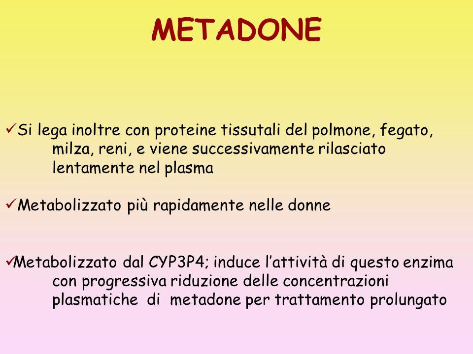 METADONE Si lega inoltre con proteine tissutali del polmone, fegato, milza, reni, e viene successivamente rilasciato lentamente nel plasma Metabolizza
