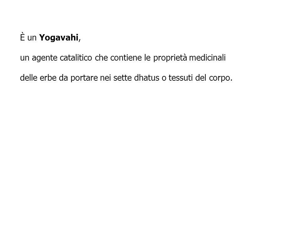 È un Yogavahi, un agente catalitico che contiene le proprietà medicinali delle erbe da portare nei sette dhatus o tessuti del corpo.