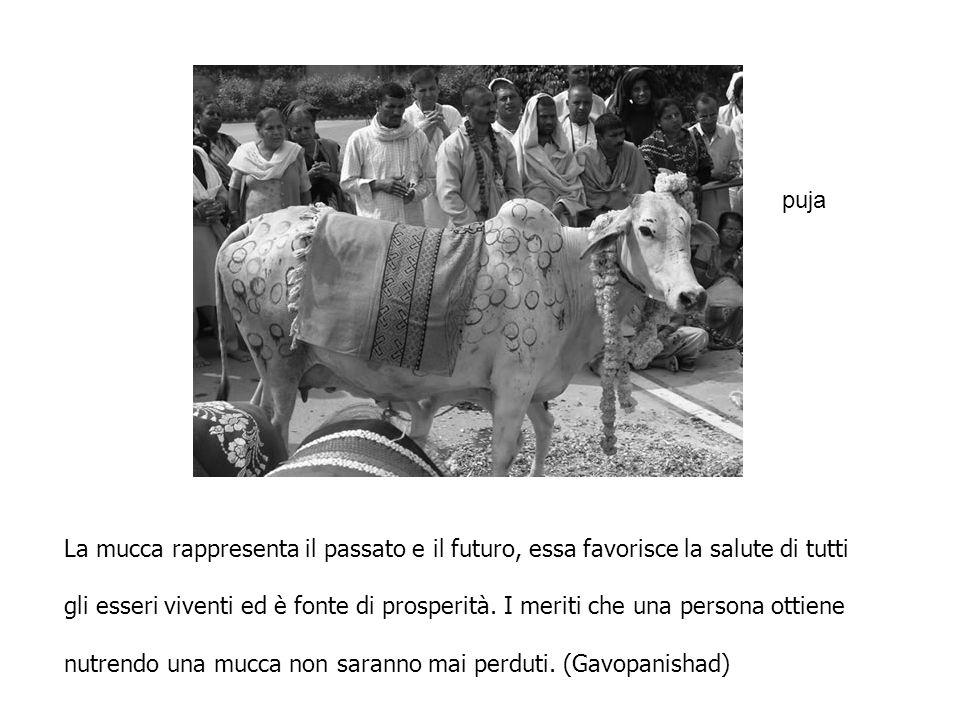 La mucca rappresenta il passato e il futuro, essa favorisce la salute di tutti gli esseri viventi ed è fonte di prosperità. I meriti che una persona o