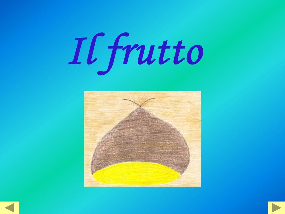 Il frutto
