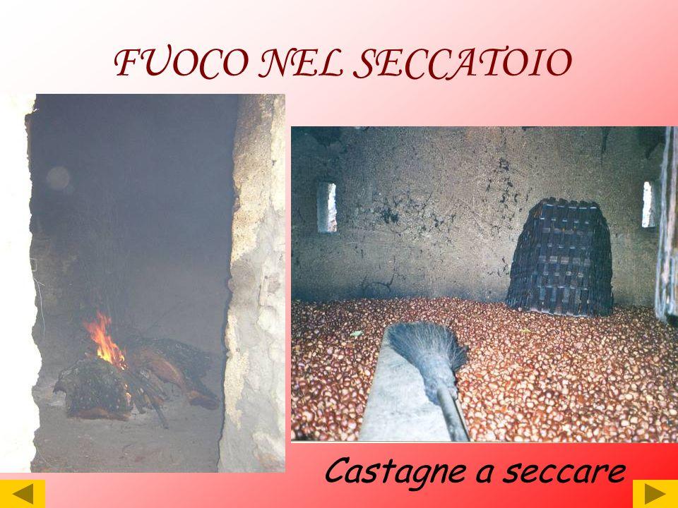FUOCO NEL SECCATOIO Castagne a seccare