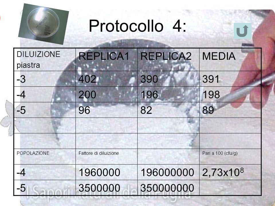 Protocollo 3: osservazione e conta delle colonie Le colonie avevano forma sferica di colore bianco. Abbiamo così eseguito la conta batterica e fotogra