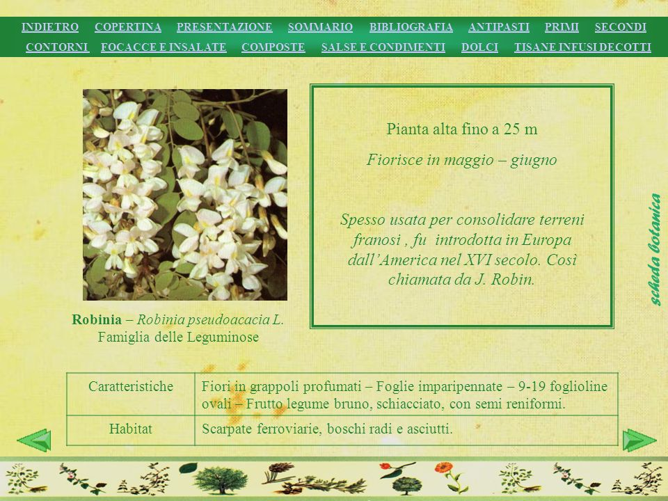 CaratteristicheFiori in grappoli profumati – Foglie imparipennate – 9-19 foglioline ovali – Frutto legume bruno, schiacciato, con semi reniformi. Habi