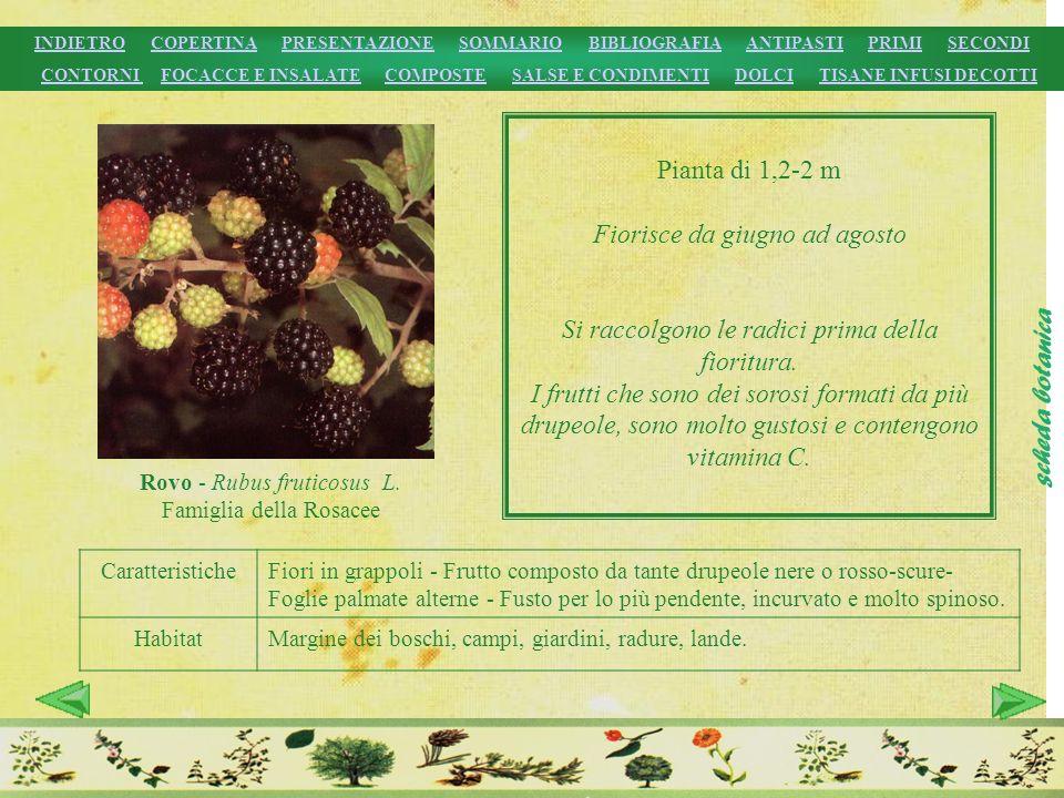 CaratteristicheFiori in grappoli - Frutto composto da tante drupeole nere o rosso-scure- Foglie palmate alterne - Fusto per lo più pendente, incurvato