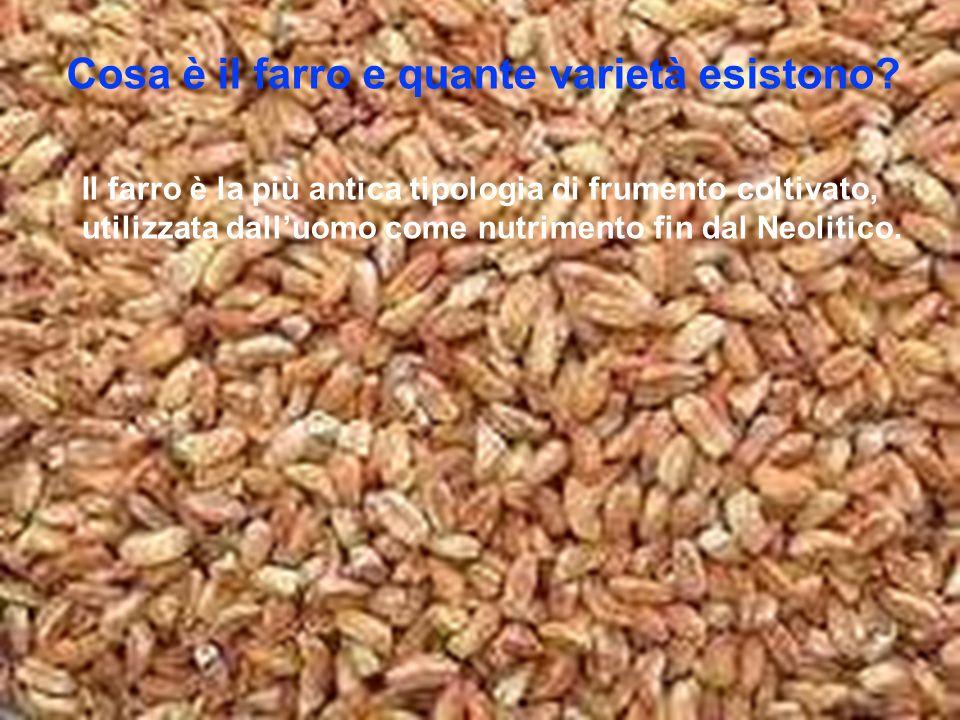 Cosa è il farro e quante varietà esistono? Il farro è la più antica tipologia di frumento coltivato, utilizzata dalluomo come nutrimento fin dal Neoli