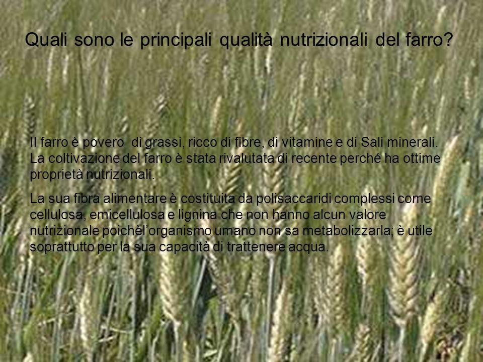 Quali sono le principali qualità nutrizionali del farro? Il farro è povero di grassi, ricco di fibre, di vitamine e di Sali minerali. La coltivazione