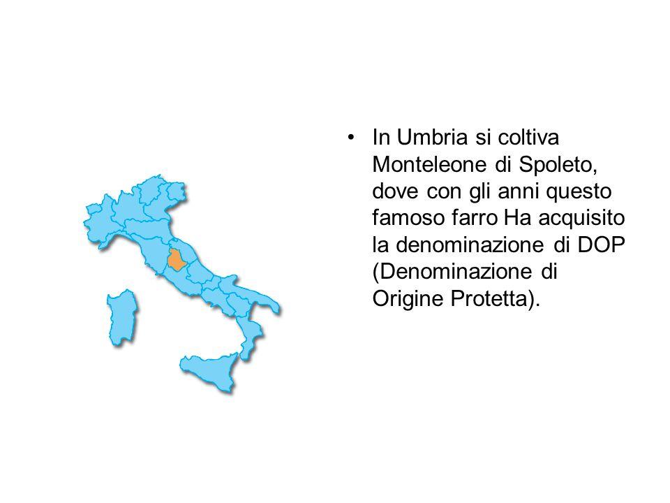 In Umbria si coltiva Monteleone di Spoleto, dove con gli anni questo famoso farro Ha acquisito la denominazione di DOP (Denominazione di Origine Prote