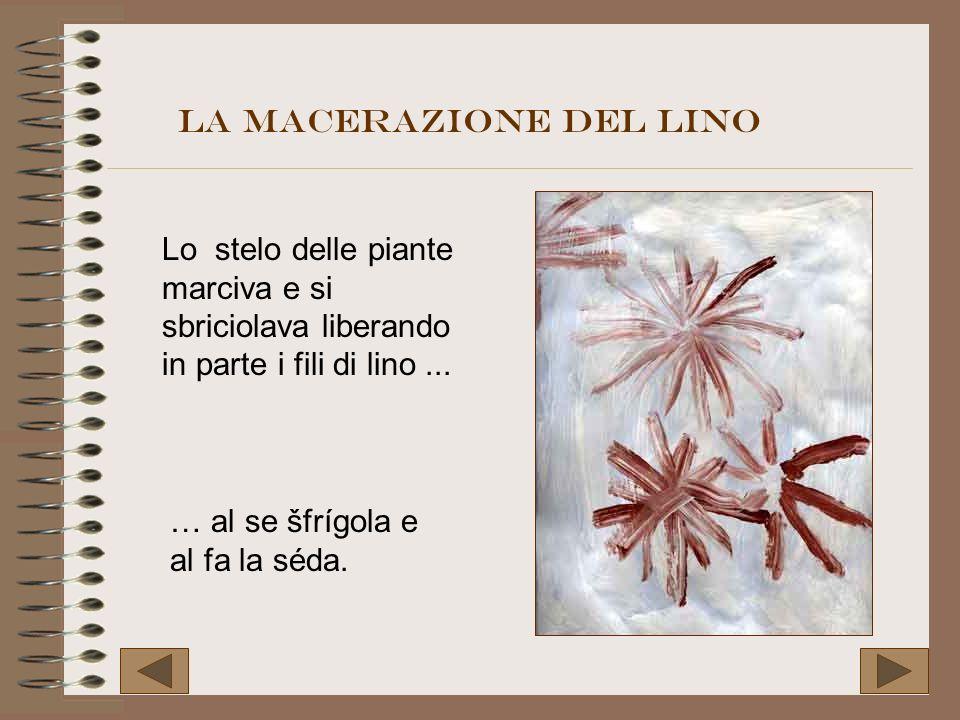 Lo stelo delle piante marciva e si sbriciolava liberando in parte i fili di lino... … al se šfrígola e al fa la séda. La macerazione del lino