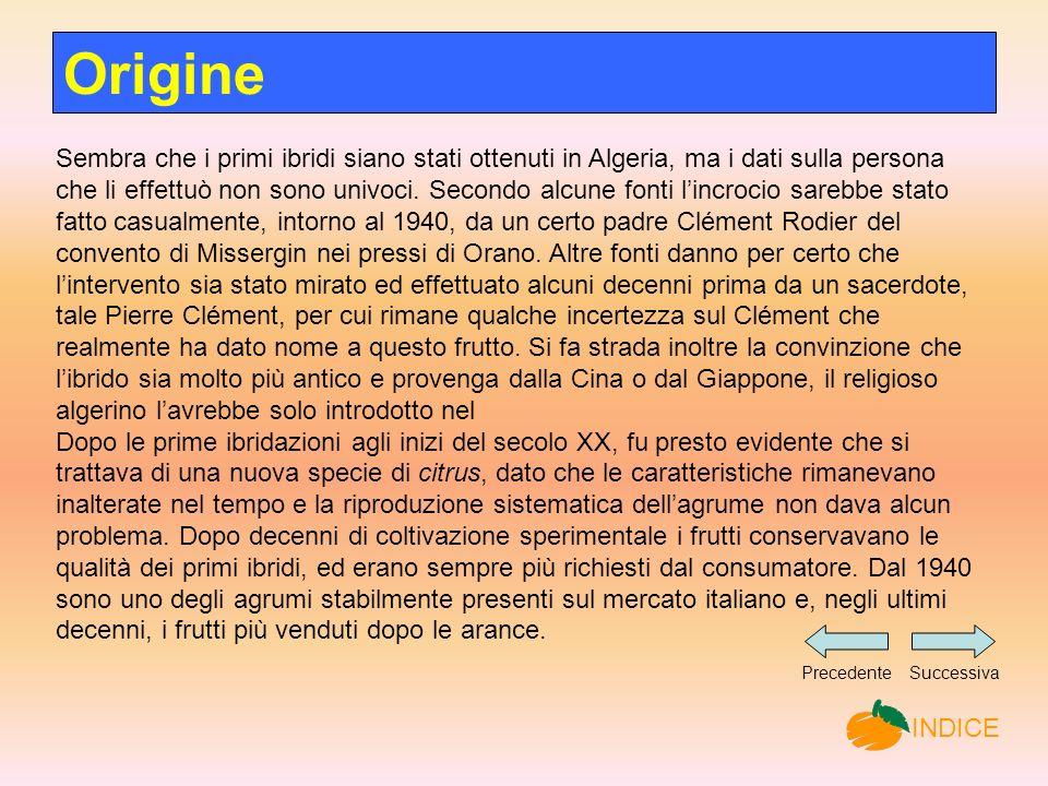 Origine Sembra che i primi ibridi siano stati ottenuti in Algeria, ma i dati sulla persona che li effettuò non sono univoci.