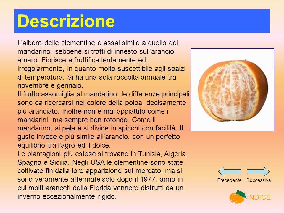 Lalbero delle clementine è assai simile a quello del mandarino, sebbene si tratti di innesto sullarancio amaro.