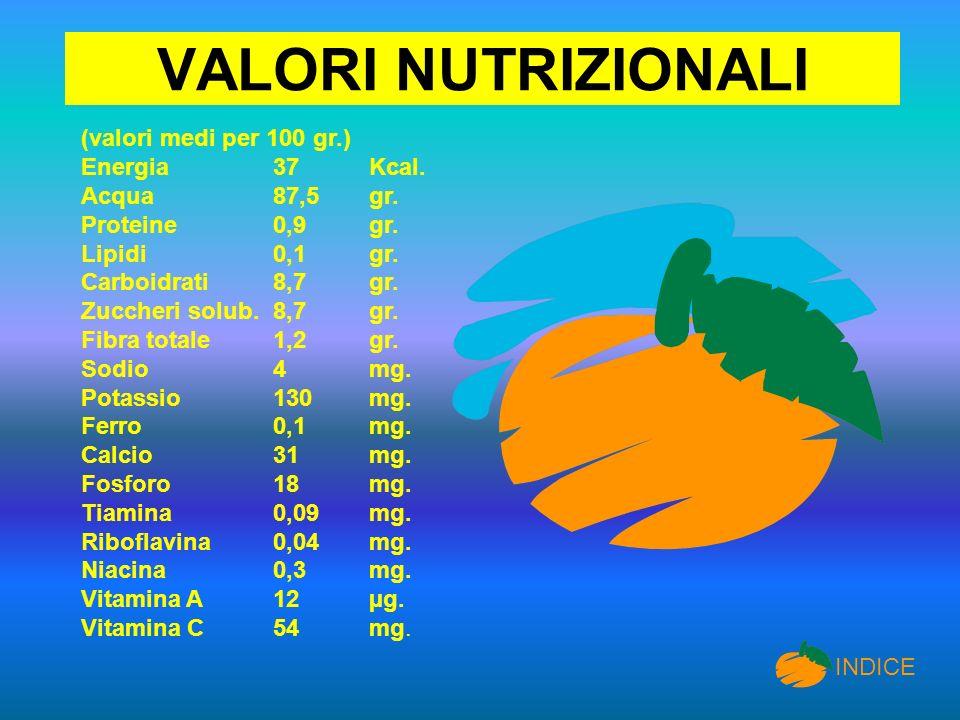 VALORI NUTRIZIONALI (valori medi per 100 gr.) Energia37 Kcal. Acqua 87,5 gr. Proteine 0,9 gr. Lipidi0,1 gr. Carboidrati 8,7 gr. Zuccheri solub. 8,7 gr