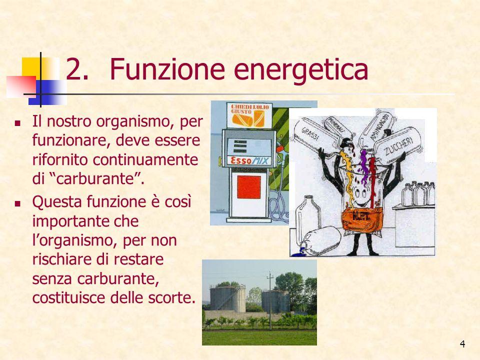 4 2.Funzione energetica Il nostro organismo, per funzionare, deve essere rifornito continuamente di carburante. Questa funzione è così importante che