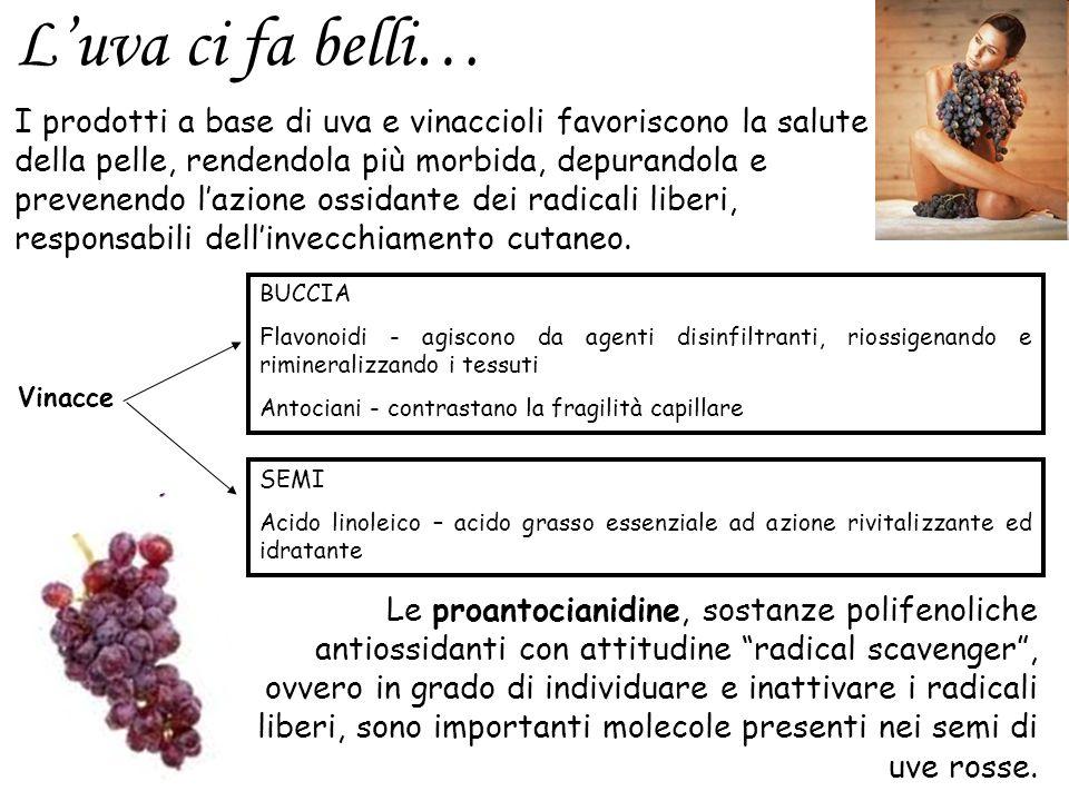 I prodotti a base di uva e vinaccioli favoriscono la salute della pelle, rendendola più morbida, depurandola e prevenendo lazione ossidante dei radica