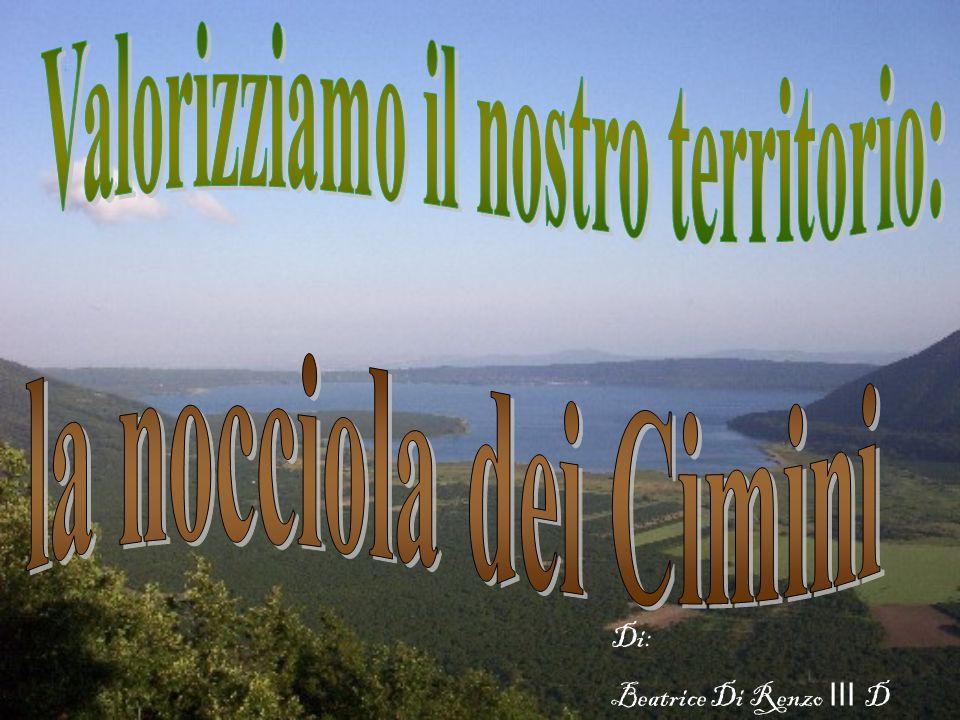 La coltivazione della nocciola nel territorio dei Monti Cimini risale alla fine del XIX secolo, alcuni documenti attestano addirittura la sua presenza nel viterbese dal XV secolo.