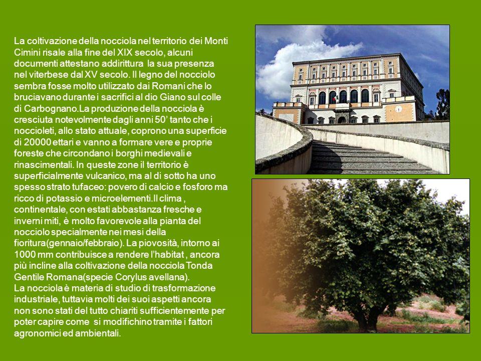 La coltivazione della nocciola nel territorio dei Monti Cimini risale alla fine del XIX secolo, alcuni documenti attestano addirittura la sua presenza