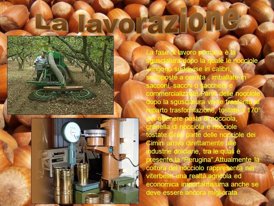 La Tonda Gentile Romana è stata inclusa tra i prodotti agroalimentari tradizionali ed è in attesa della certificazione europea di Denominazione di Origine protetta(DOP).