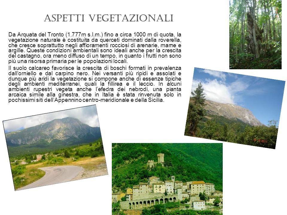 La leggenda della quercia miracolosa Nel 1680 gli abitanti di Arquata e quelli di Ascoli Piceno erano da lungo tempo in lotta tra loro.