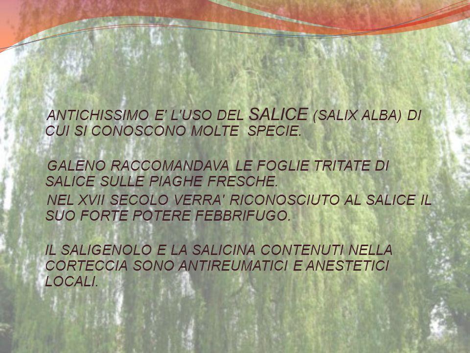 ANTICHISSIMO E' L'USO DEL SALICE (SALIX ALBA) DI CUI SI CONOSCONO MOLTE SPECIE. GALENO RACCOMANDAVA LE FOGLIE TRITATE DI SALICE SULLE PIAGHE FRESCHE.