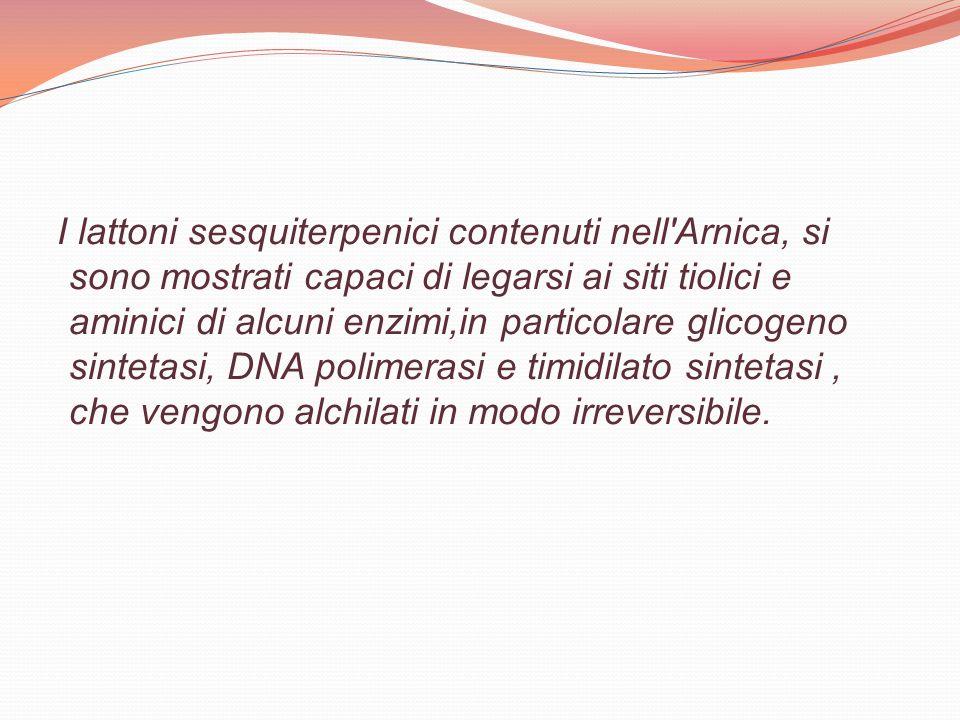 I lattoni sesquiterpenici contenuti nell'Arnica, si sono mostrati capaci di legarsi ai siti tiolici e aminici di alcuni enzimi,in particolare glicogen