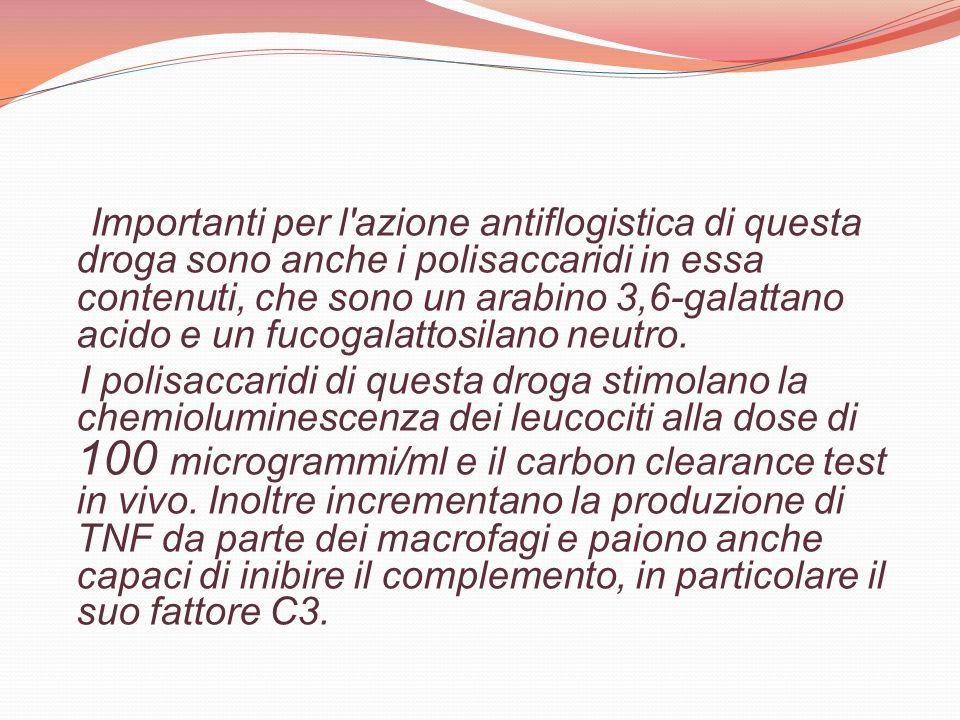 Importanti per l'azione antiflogistica di questa droga sono anche i polisaccaridi in essa contenuti, che sono un arabino 3,6-galattano acido e un fuco