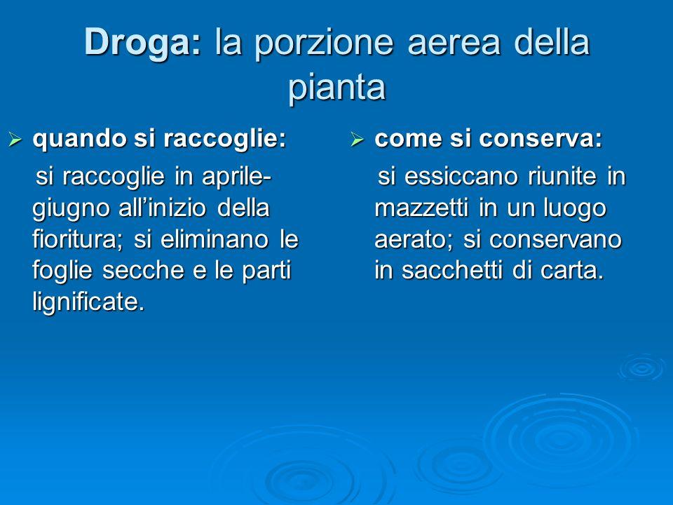 Droga: la porzione aerea della pianta quando si raccoglie: quando si raccoglie: si raccoglie in aprile- giugno allinizio della fioritura; si eliminano le foglie secche e le parti lignificate.