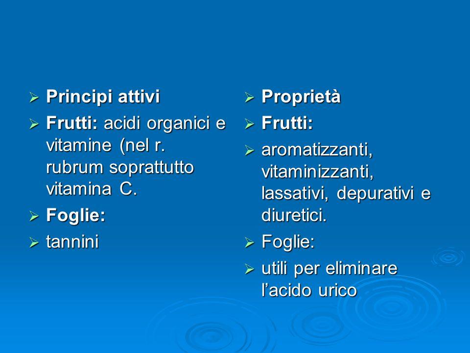 Principi attivi Principi attivi Frutti: acidi organici e vitamine (nel r.